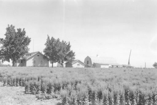 HÖRSPIELWIESE KÖLN Die Frauen von Nampa, Idaho